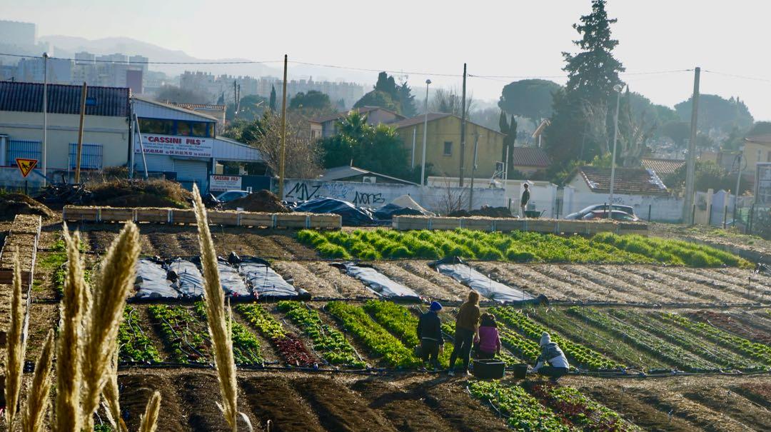 L'Agriculture Urbaine une aubaine pour nos villes